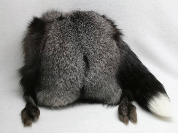 Beautiful muff made of blue frost fox furs with tail and paws intact