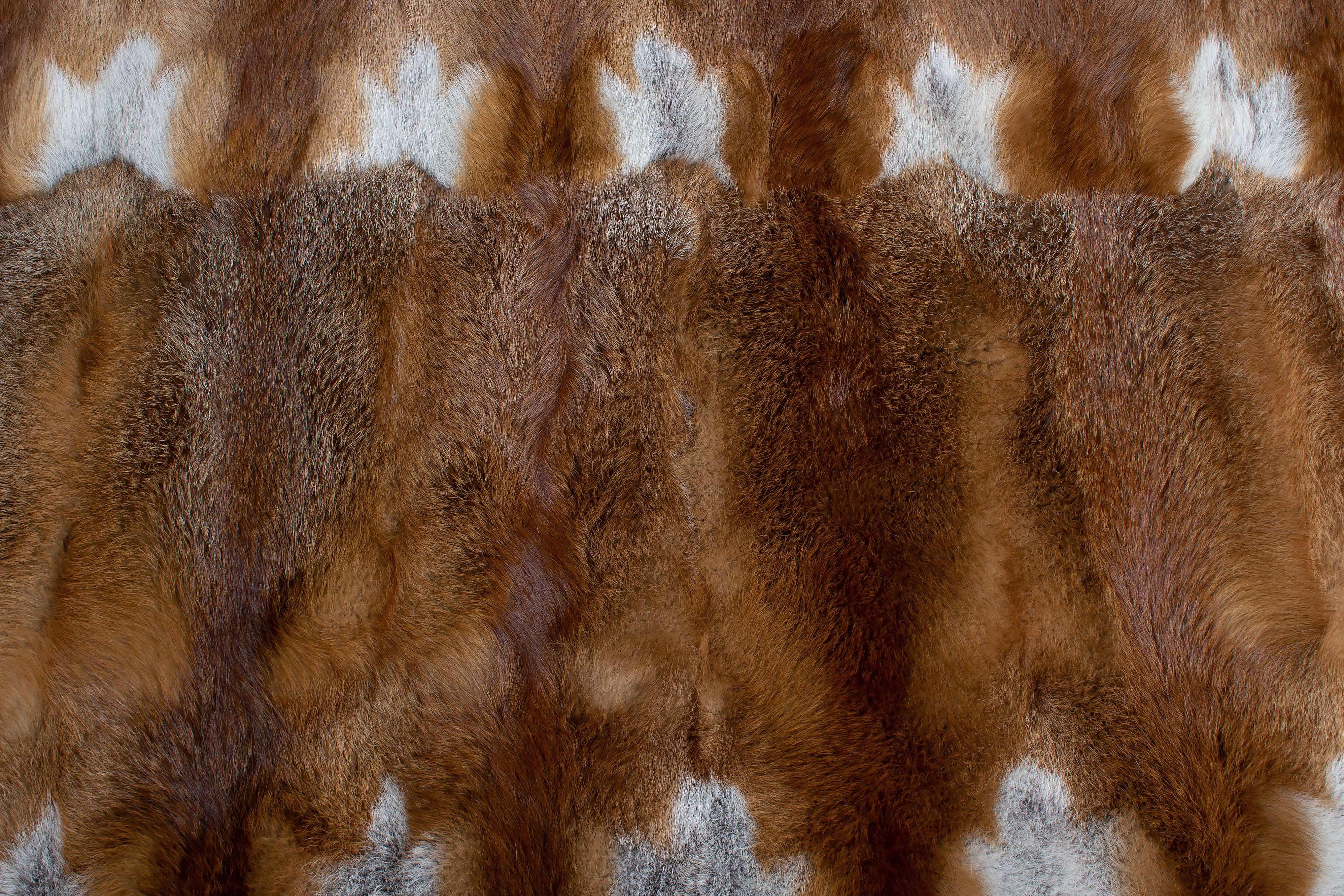 European Red Fox Fur Rug Natural Color