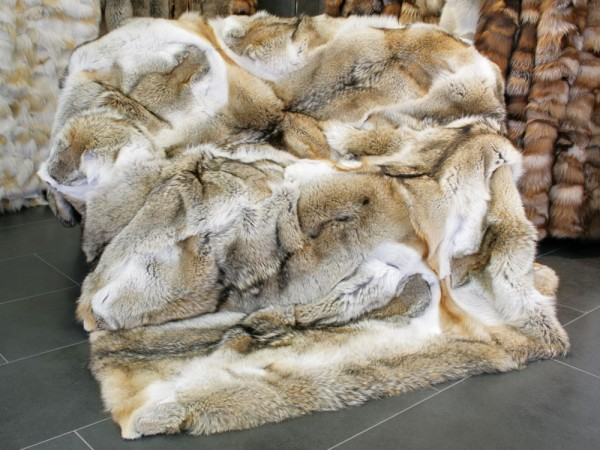 Coyote Fur Blanket in its natural color